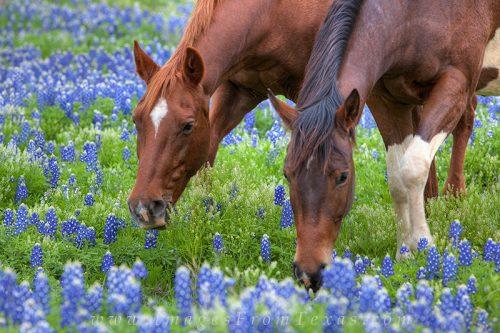 Sieraden met Paardenhaar